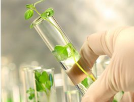 Call for papers in environmental sciences
